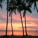 llbc-palm-trees-at-sunset